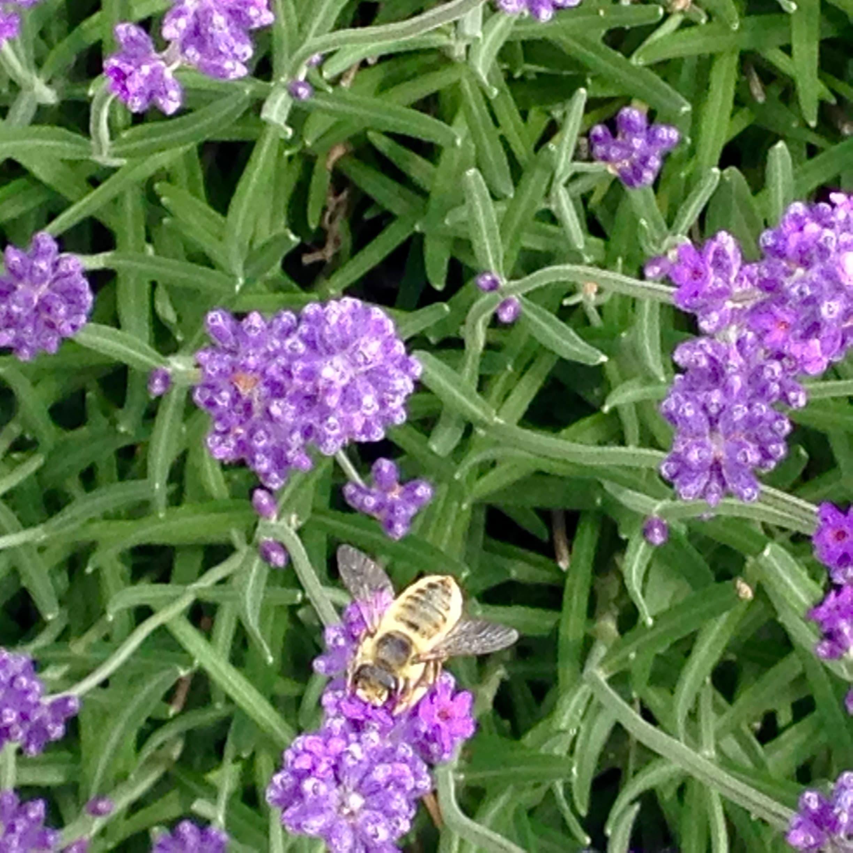 TMBuilders-Landscape-Garden-Bee